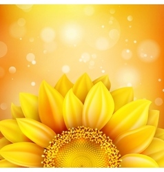 Floral autumn background EPS 10 vector image
