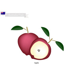 Fresh apple the national fruit of australia vector