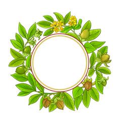 jojoba branches frame on white background vector image