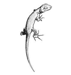 Lizard hand drawn vector