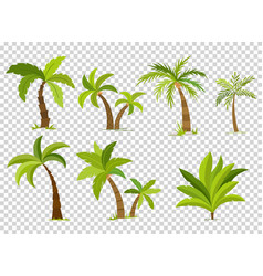 Palm trees isolated on transparent background vector