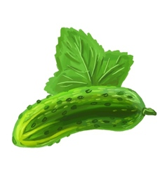Picture of cucumber vector
