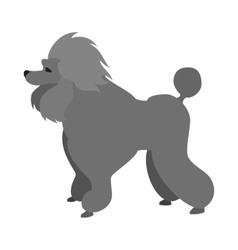 Poodle dog flat vector image
