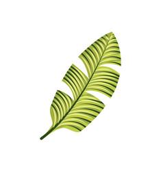 Tropical leaf icon vector