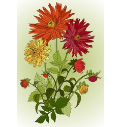 Bouquet of Beautiful Flowers Sketch vector image