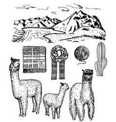 ink hand drawn alpaca icon set vector image