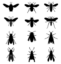 Bees and wasps vector