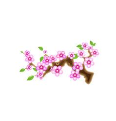 branch sakura cherry blossom vector image