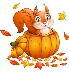 cute squirrel in a pumpkin vector image
