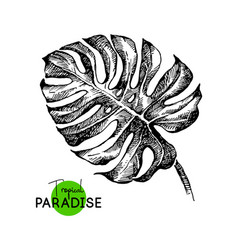 hand drawn sketch tropical paradise plants vector image