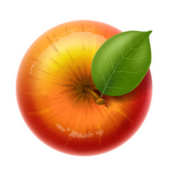 Red apple delicious ripe and juicy fruit vector