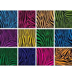 colorful skin textures of zebra vector image vector image
