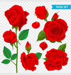 rose realistic transparent set vector image