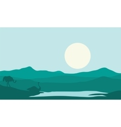 Silhouette of two ostrich in lake vector image