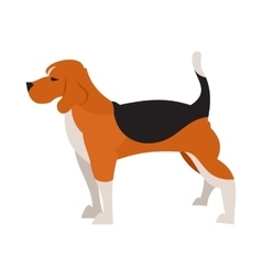 Beagle dog isolated vector image
