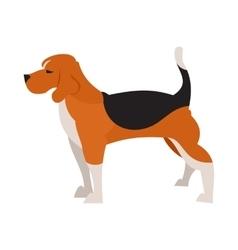 Beagle dog isolated vector image
