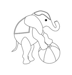 elephant on the ball circus vector image