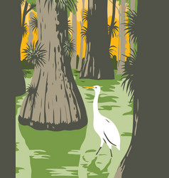 Everglades national park with egret in mangrove vector