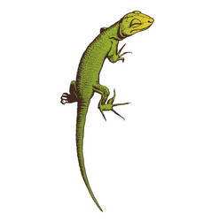 Green lizard hand drawn vector