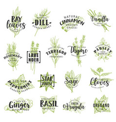 Herbs spices seasonings and condiments lettering vector