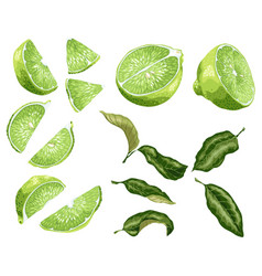 Lime parts set with lime fruit halves of a fruit vector
