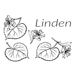Linden leaves pictogram set vector