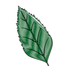 Natural leaf botanical foliage ecology element vector