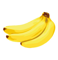 Yellow banana fruit vector