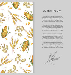 hand drawn cereals corn wheat banner design vector image vector image