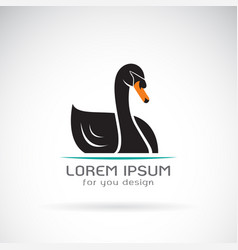 black swan design on white background logo vector image