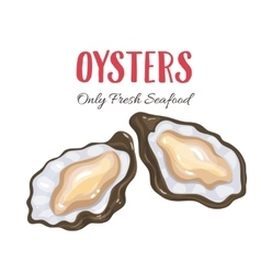 Oysters in cartoon style vector image vector image
