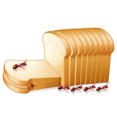 Bread and ants vector image