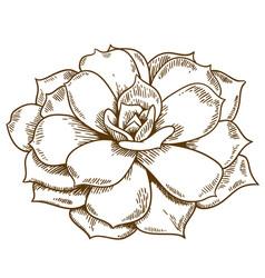 Engraving succulent vector