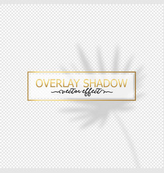 overlay shadow effect palm leaf on vector image