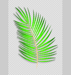 Beautiful naturalistic palm leaf on transparent vector