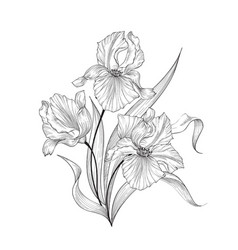 Floral bouquet flower iris fourish greeting card vector
