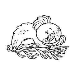hand drawing koala in cartoon style animal vector image