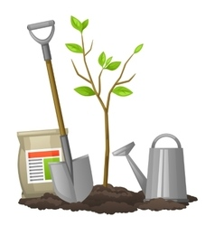 Seedling fruit tree with shovel fertilizers and vector