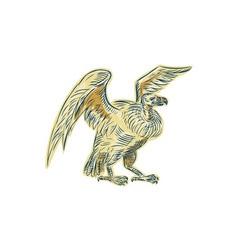Vulture buzzard etching vector