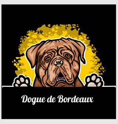 Color dog head dogue de bordeaux breed on black vector