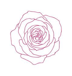 Linear graphic art of rose flower vector