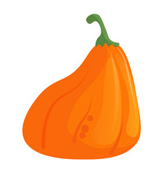 pumpkin squash and gourd isolated on white vector image