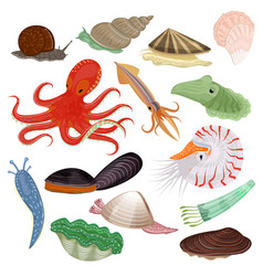 shellfish marine animal octopus molluscs vector image
