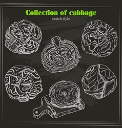 collection of cabbage in sketch style on dark vector image