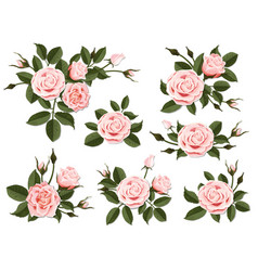 pink rose boutonniere set vector image