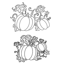 Black and white line drawings of pumpkins vector