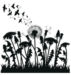 field dandelion flowers black silhouettes vector image