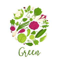 Green salads fresh vegetables and farm herbs vector