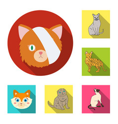 Pet and sphynx icon set of vector