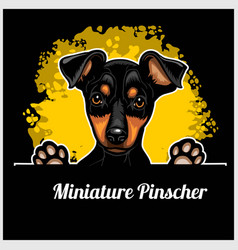 Color dog head miniature pinscher breed on black vector